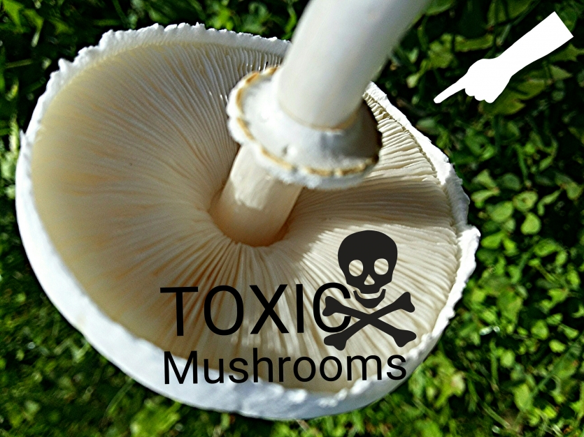 TOXIC MUSHROOMS