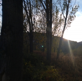 Sun and trees in November