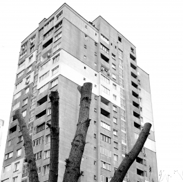 Тhe tree's environment in the city