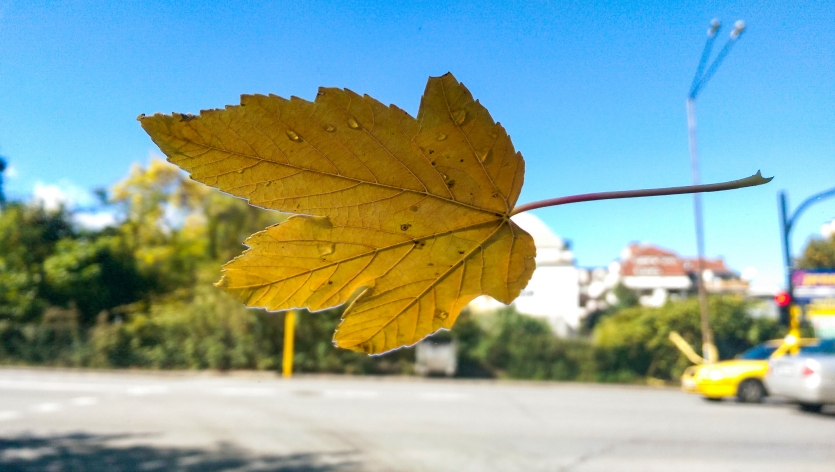 Leaf is in the air, everywhere i look around...