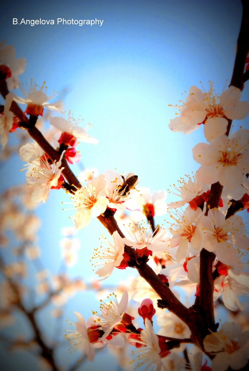 A beautiful blooming tree during the spring
