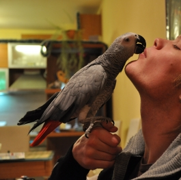 My parrot and me