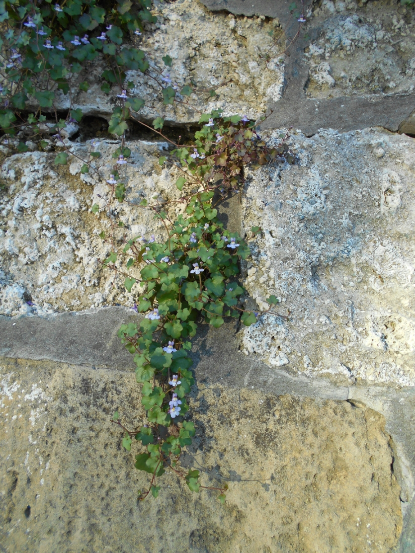 small beauties that grow out of the walls