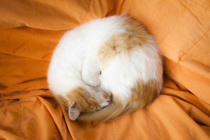 Yellow and Orange Ball of Fur