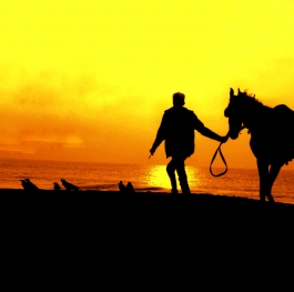 A horse with his owner