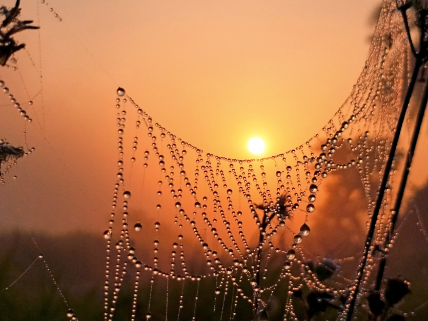Sunrise with dewdrops