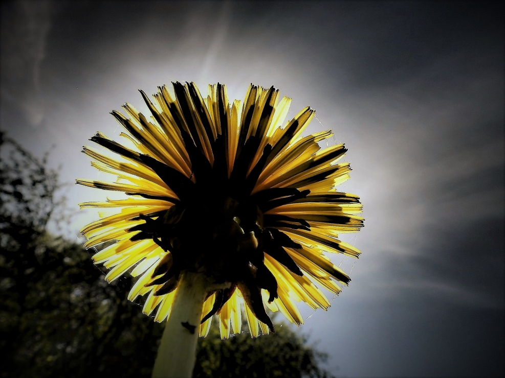 The Flower of the Sun