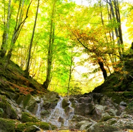 Тhe leaves fall, the water falls
