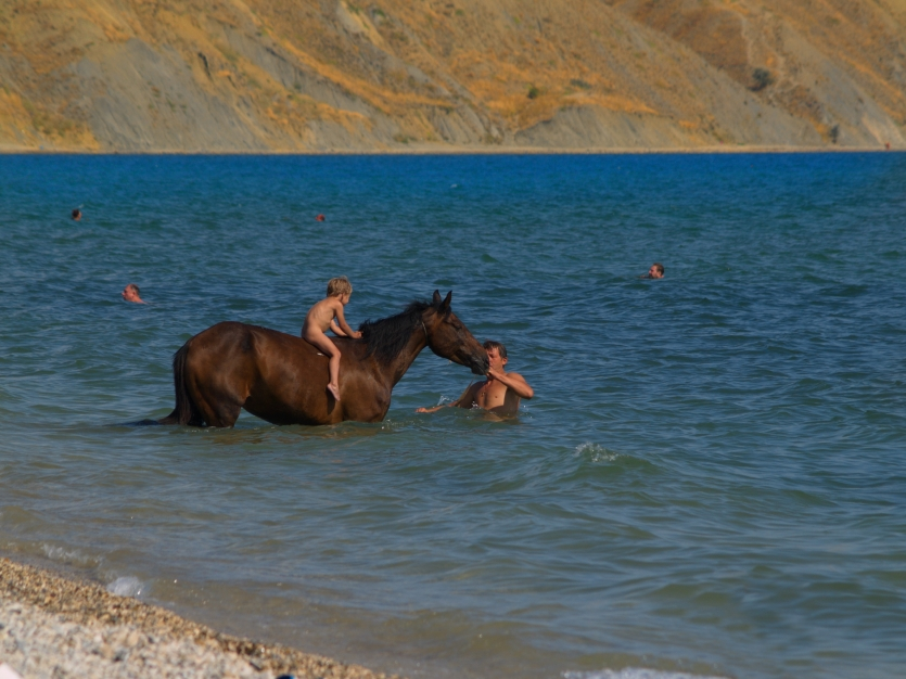 Bathing of a horse.