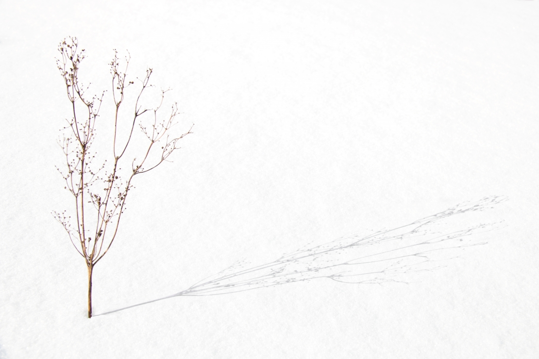 Twig on the snow