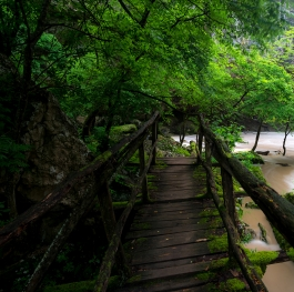On the wooden bridge to the waterfall
