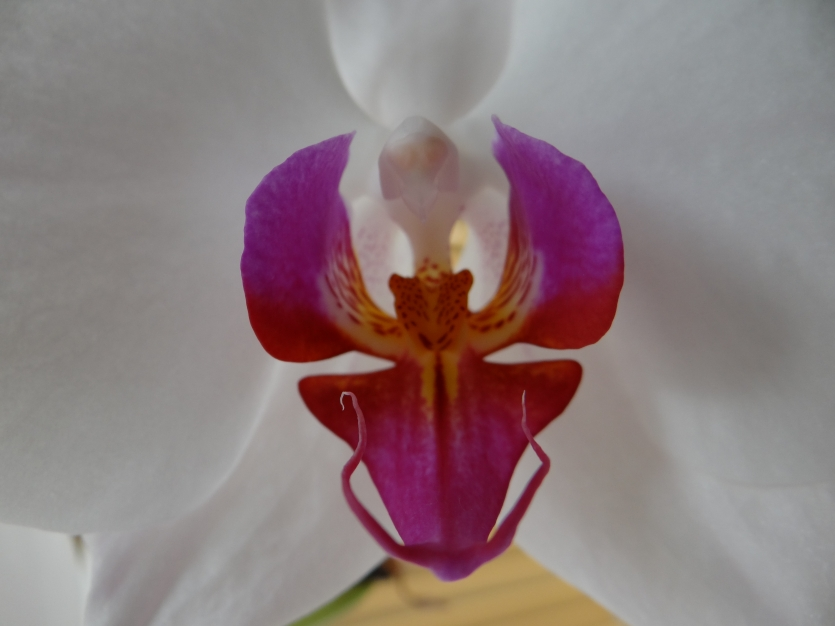 The mystery of the white orchid
