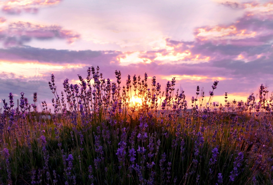 Sunset, with a lavender aroma