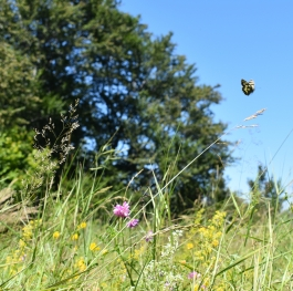 Butterfly on Vitosha