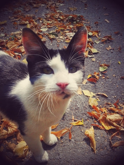 Autumn Whiskers