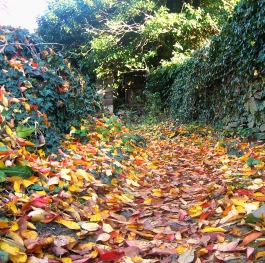 A path of orange leafs..