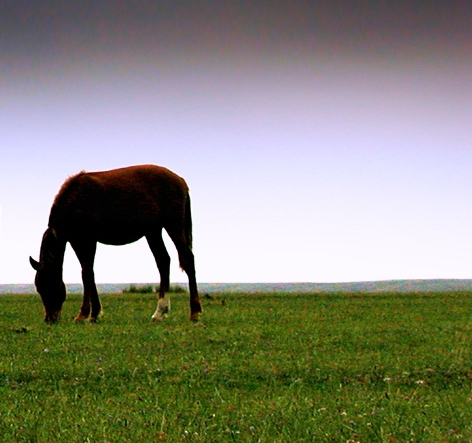 alone horse