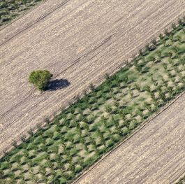 Aerial view - trees on the field