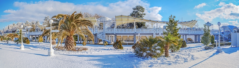 Snow-covered palm trees against the background of the beach of a resort of Sochi