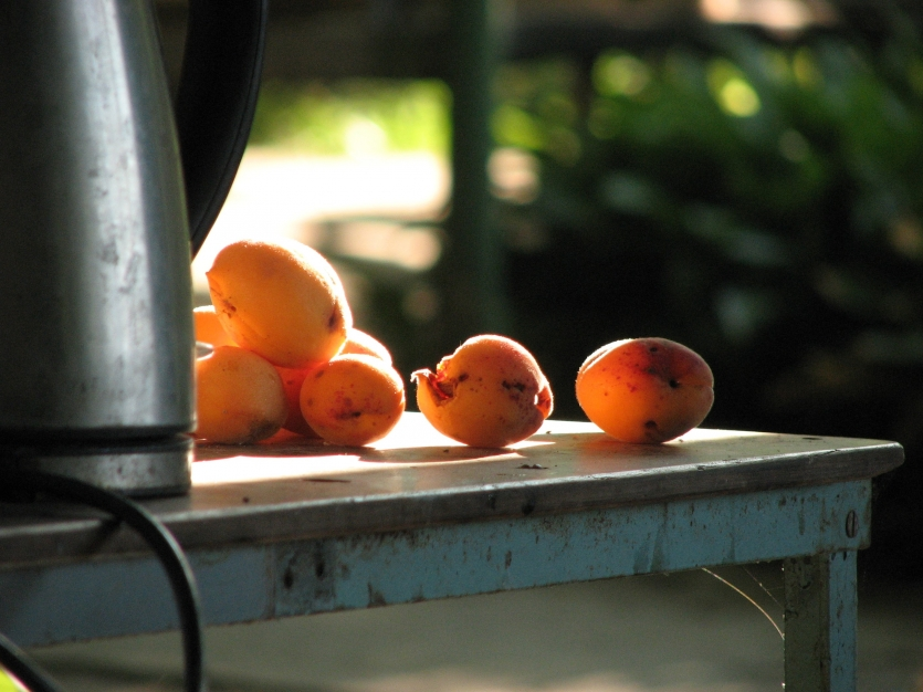Apricots on the table