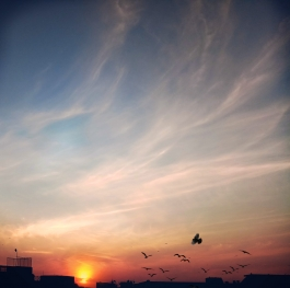 Red sky with birds