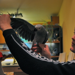 Me and my parrot