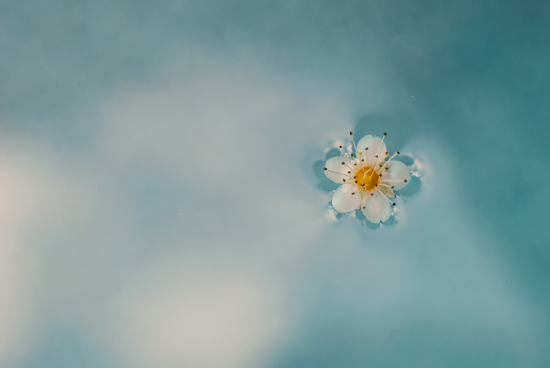 floating flower