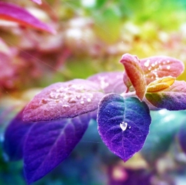 Colorful leaves hd photo
