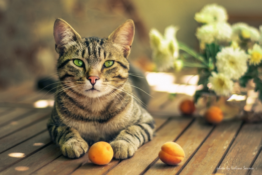 Portrait of a cat with fruits