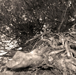 TREE ROOTS FROM BURGAS SEA GARDEN in Bulgaria