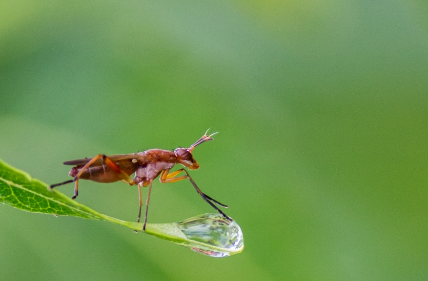 Love On The Dew