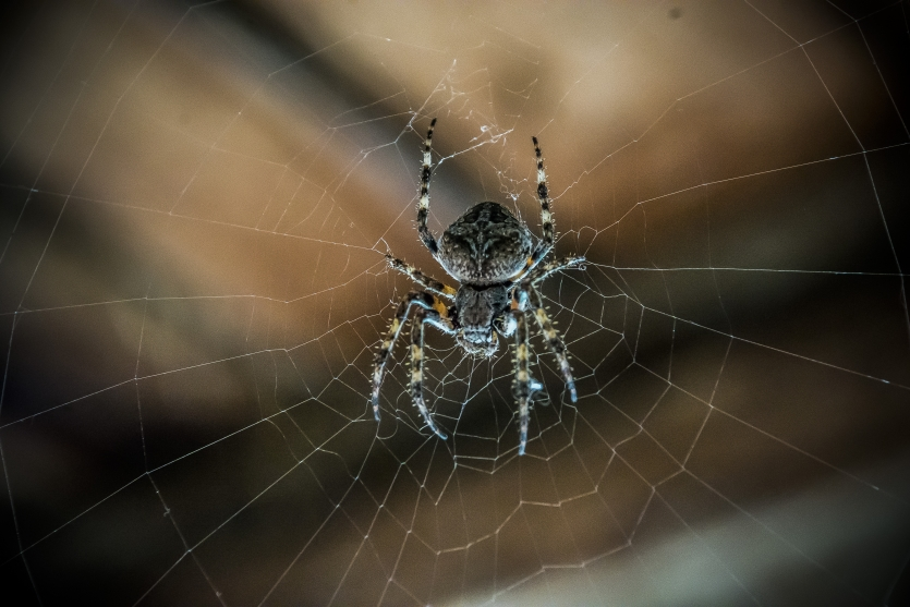 Creepy Barn Spider
