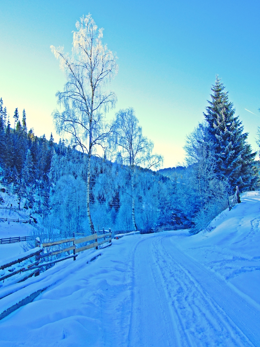 Forest Road in Bucovina