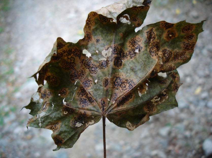 Leaf in the forest