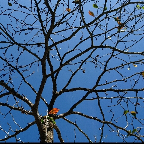 Bright Blue Sky In Autumn...